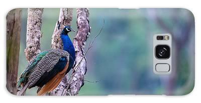 Designs Similar to Indian Peafowl