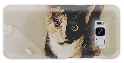 Cat Galaxy Cases