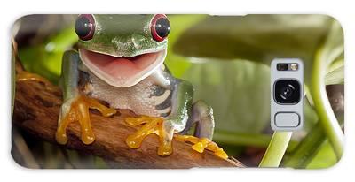 Designs Similar to Red-eyed Tree Frog Smile