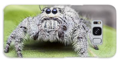 Jumping Spider Galaxy S8 Cases