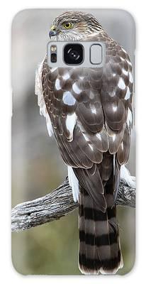 Sharp-shinned Hawk Galaxy Case