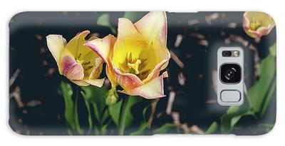 Tulips At Hershey Gardens Galaxy Case