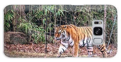 Designs Similar to Tiger by Sandi Kroll