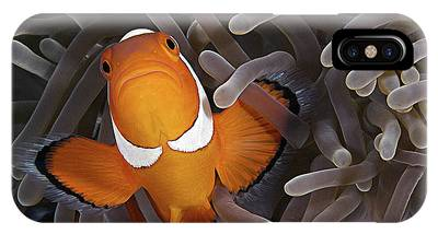 Clownfish Phone Cases
