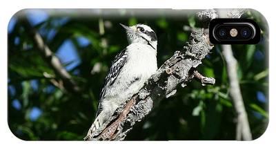 Woodpecker Phone Cases
