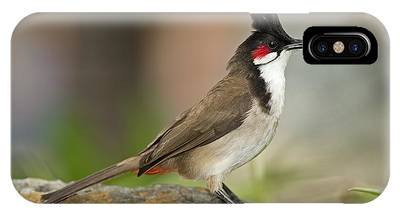 Red Whiskered Bulbul Phone Cases