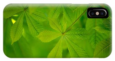 Chestnut Phone Cases