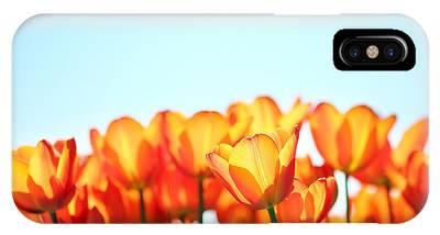 sun salutation photographrebecca cozart