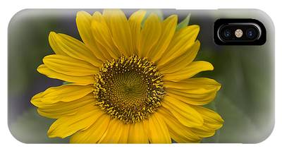 IPhone Case featuring the photograph Sunflower Vr. 'dwarf Sunspot ' by Richard J Thompson
