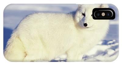 Arctic Fox Phone Cases