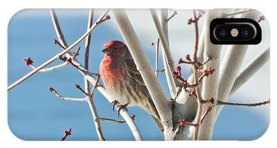 Wintering Sparrow IPhone Case