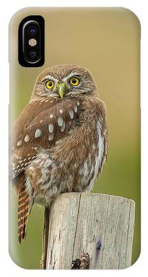 Pygmy Owl Phone Cases