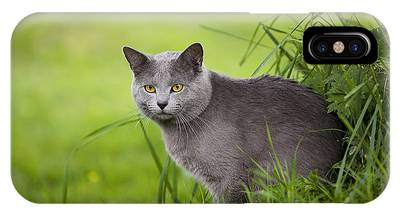 Chartreux Phone Cases