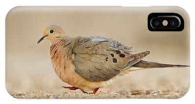 Mourning Dove Phone Cases