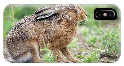 European Hare Phone Cases