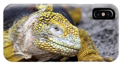 Land Iguana Phone Cases