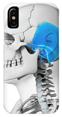 Temporal Bone Phone Cases