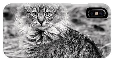 IPhone Case featuring the photograph A Young Maine Coon by Rona Black