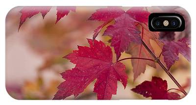 Red Maple Tree Phone Cases