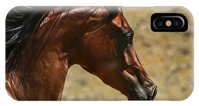 Bay Thoroughbred Horse Phone Cases