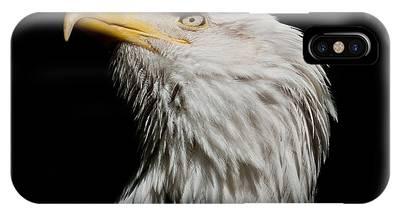 Bald Eagle Looking Skyward IPhone Case