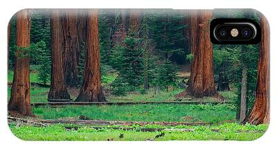 Bear In Sequoia National Park IPhone Case