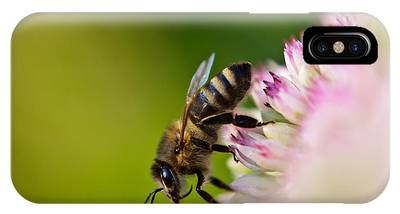 Bee Sitting On A Flower IPhone Case