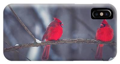Cardinal Birds Phone Cases