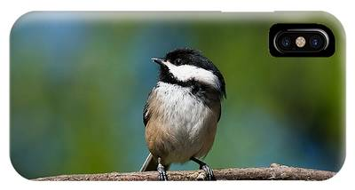 Black Capped Chickadee Perched On A Branch IPhone Case