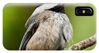 Black Capped Chickadee Singing IPhone Case