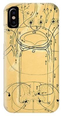 Biological Illustration Phone Cases