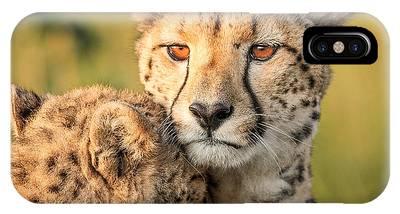 Cheetah Phone Cases