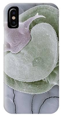 Larvae Phone Cases