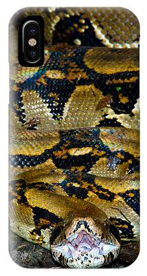 Boa Constrictor Phone Cases