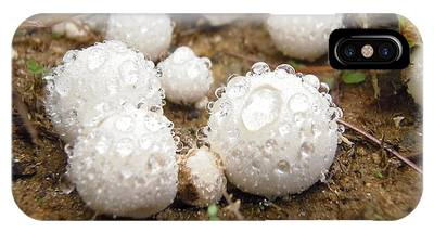 Common Puffball Dewdrop Harvest IPhone Case