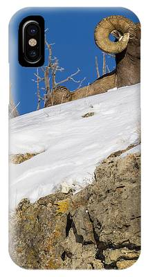 Images By Mark Andrews Phone Cases