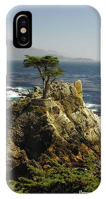 Cypress IPhone Case