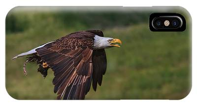 Eagle With Prey IPhone Case