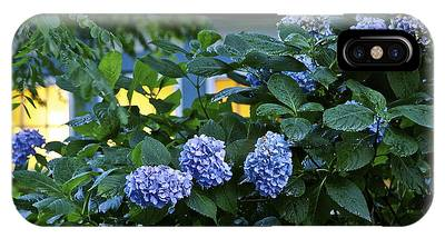 Evening Hydrangeas IPhone Case