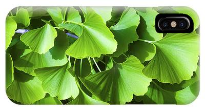 IPhone Case featuring the photograph Fan Shaped Leaves by Richard J Thompson