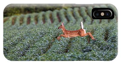 White-tailed Buck Phone Cases
