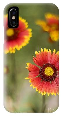 IPhone Case featuring the photograph Gaillardia 'arizona Sun' by Richard J Thompson