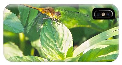 Golden Dragonfly On Mint IPhone Case