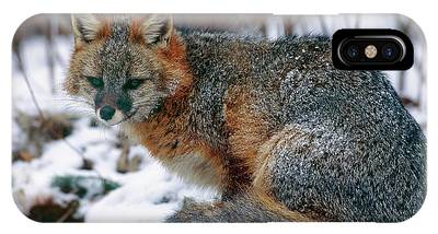 Grey Fox Phone Case by William Ervin/science Photo Library