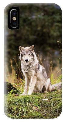 Husky iPhone Cases