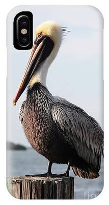Handsome Brown Pelican IPhone Case