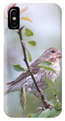 House Sparrow In The Apple Tree IPhone Case