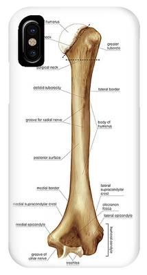 Atlas Of Human Anatomy Phone Cases