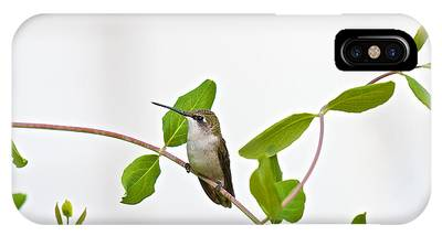 Hummingbird Hanging Out On The Honeysuckle IPhone Case