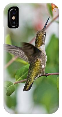 Hummingbird Reaching For The Blossoms IPhone Case